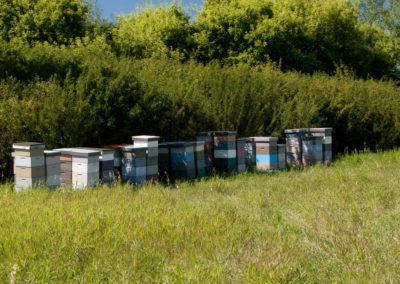 McFall Beeyard Bee Help Beekeeping Ferndale Custer Lynden Blaine Birch Bay Whatcom county