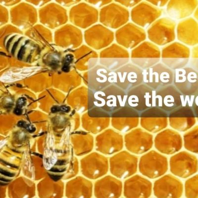 Save the bees, save the world local bees whatcom county WA near Bellingham