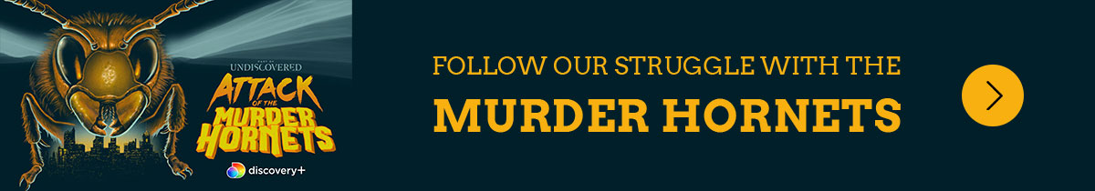 Follow our struggle with the Murder Hornets