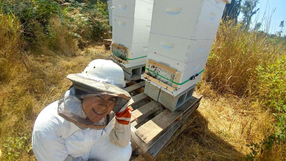 Raw Natural Honey - Beekeeper tending beehives.